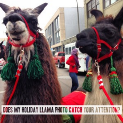 Create An Email Newsletter Holiday Llama