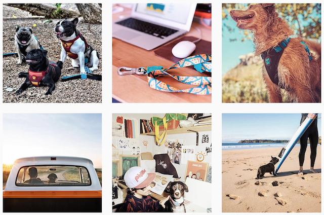 zeedog-instagram