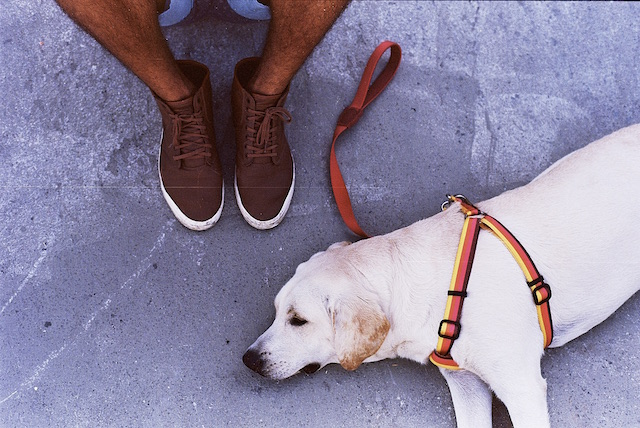 zeedog-relax
