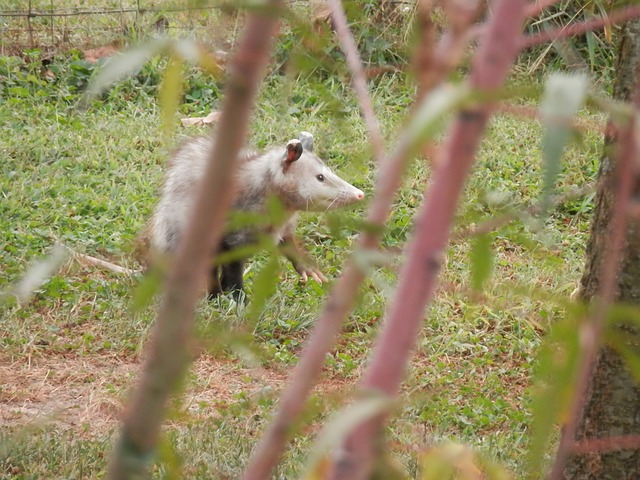 Google SEO Possum