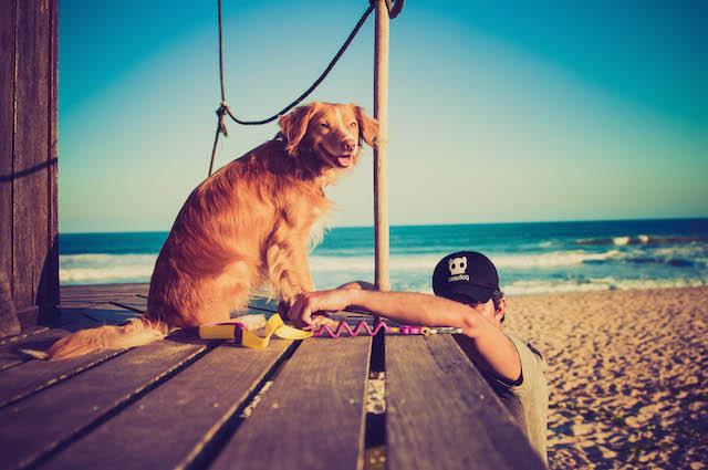 Pet Supplier Thadeu Diz Zee-Dog