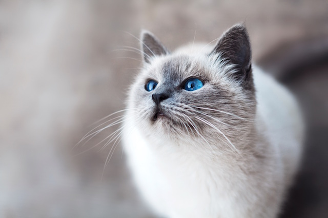Market Pet Grooming Cat
