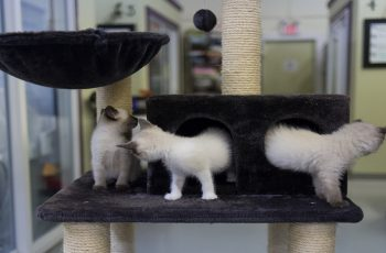 Increase Pet Adoptions
