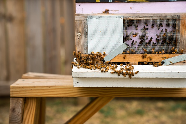 Bees moving around at the entryway to a hive