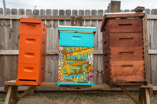 Three city beehives on a wooden sawhorse