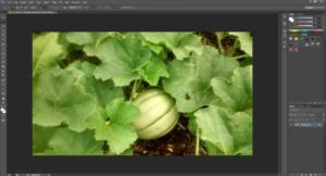 Image Optimization for WordPress with Gimp