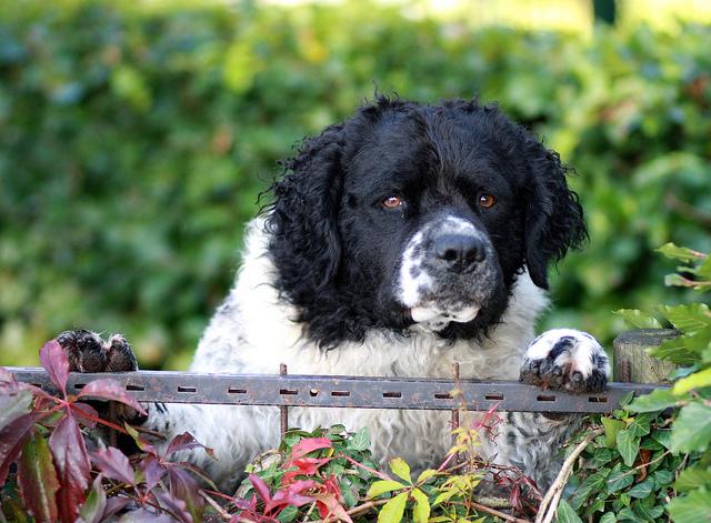 Advanced Web Security Guard Dog