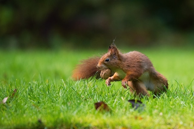 Buying an Investment Property Squirrel