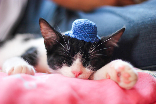 Cats With Hats Cap