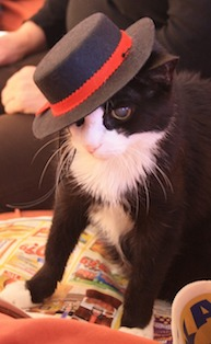 Cats With Hats Fedora