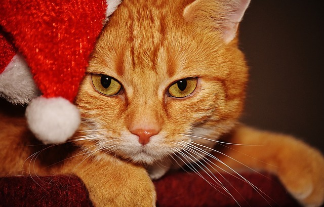Cats With Hats Santa