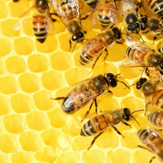 Crowdfunding Campaigns Bees