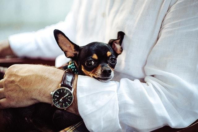 Customer Advocates Puppy