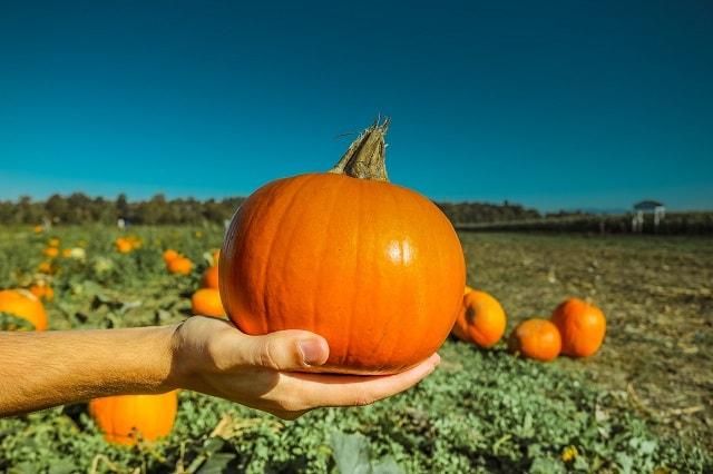 Customer Appreciation Pumpkin