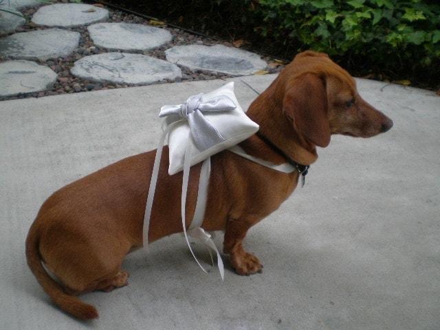 Dog Grooming School Wedding