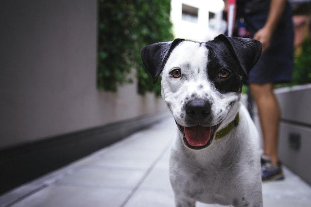 Dog Sitting Rates Walker
