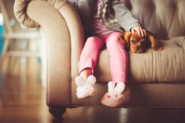 Find A Tenant Pets