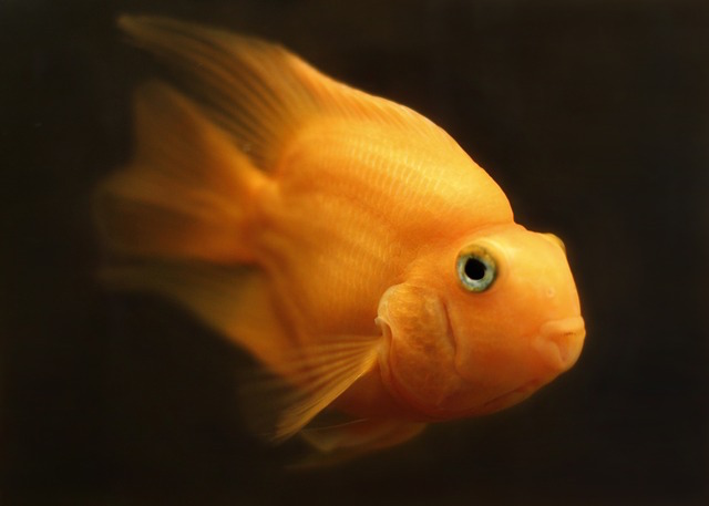 Funny Domain Names Goldfish]