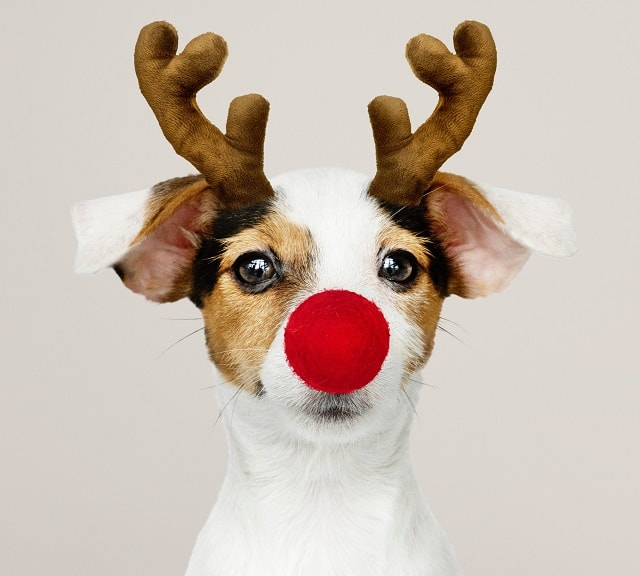 Holiday eCommerce Planning Dog Dressed As Reindeer