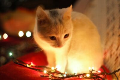 Holiday Marketing Campaigns Cat With Lights