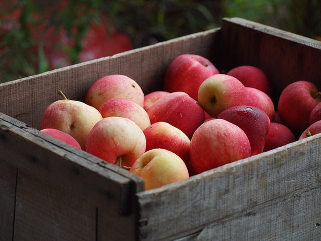 How Much Does A Domain Name Cost Apples