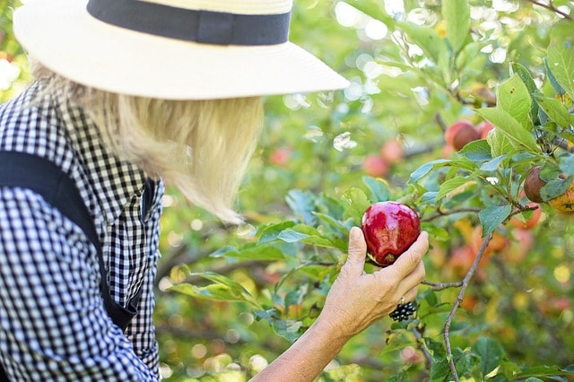 How To Get YouTube Subscribers Woman Picking Fruit
