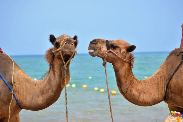 How to Start a Travel Blog Camels