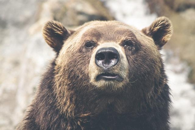 Interviewing Skills Bear