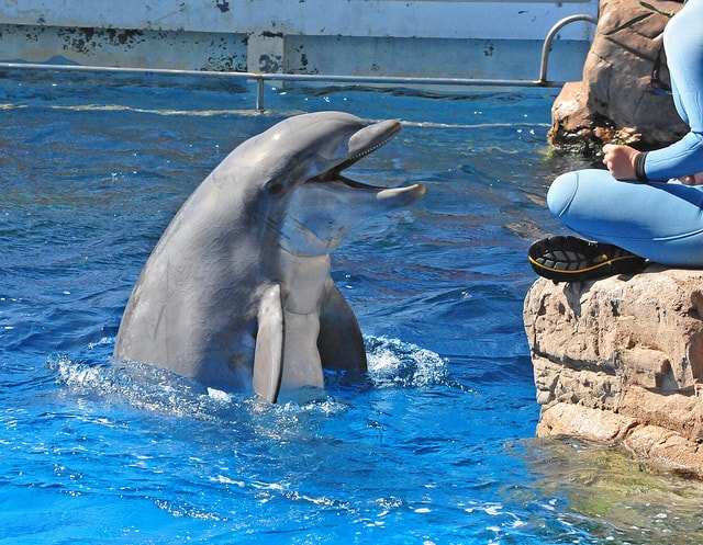 Jobs Working with Animals Dolphin