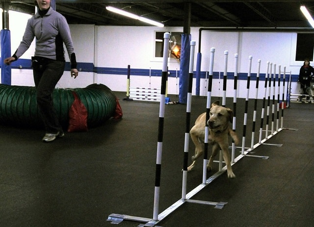 Local Dog Trainer Obstacle