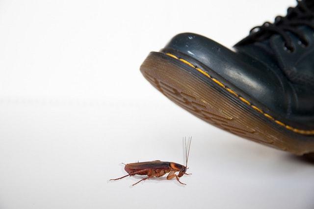 Pest Control Services Roach
