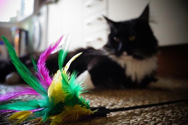 Pet Care Supplies Cat