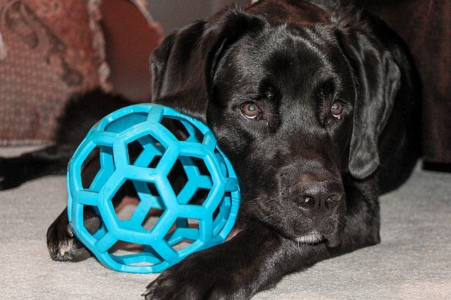 Pet Care Supplies Toy
