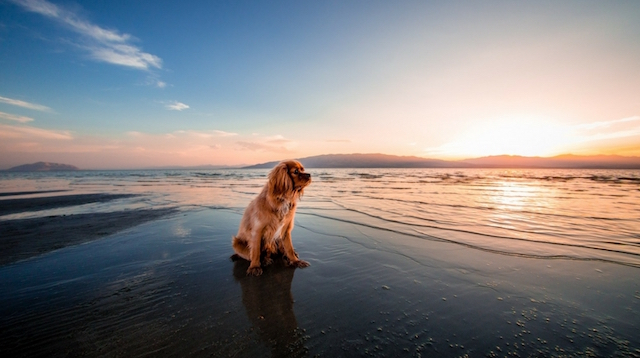 Pet Sitting Waves