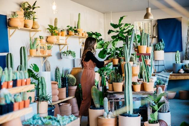 Ponderosa Cactus Arrangement