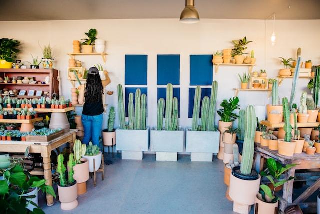 Ponderosa Cactus Shop Setup