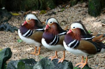 Post-tax Ducks In Row