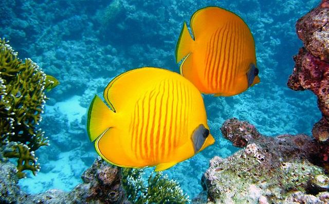 Product Naming Bright Fish
