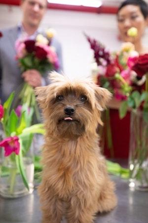 Rachel Cho Floral Design Cute Dog