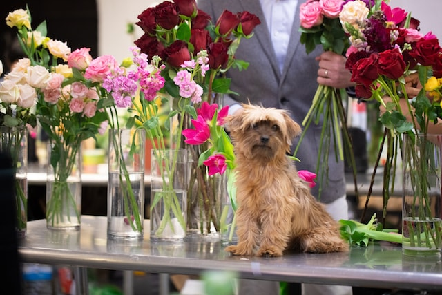 Rachel Cho Floral Design Puppy with Flowers