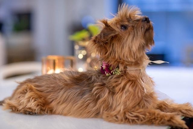 Rachel Cho Floral Design Dog