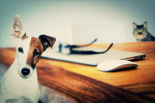 Small Business Tax Changes Dog Cat Next to Laptop
