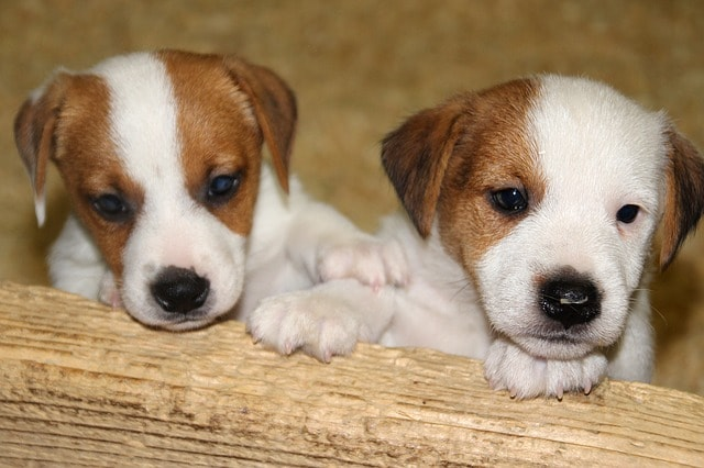 Small Business Tax Changes Two Puppies