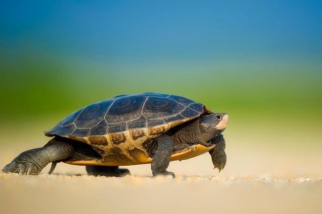 Social Media Customer Service Turtle