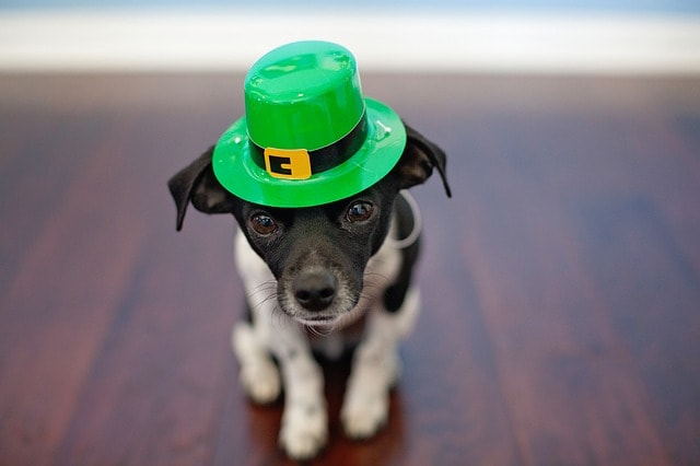 St. Patrick's Day Marketing Dog In Green Hat
