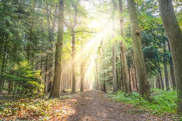 Travel Industry Insiders LIght Shining Through Trees
