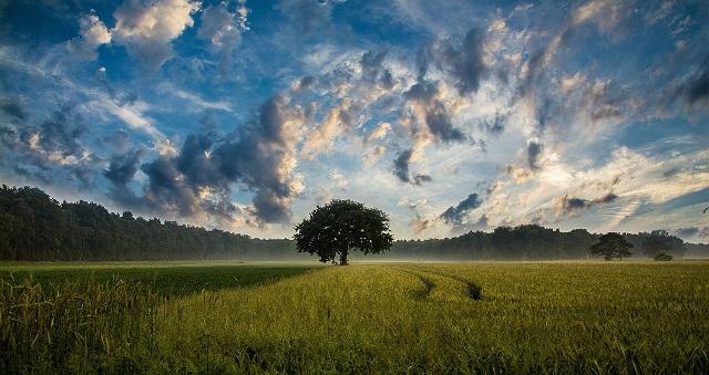 Tree In Middle Of Vast Field