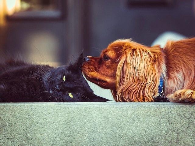 Vet Care Pets