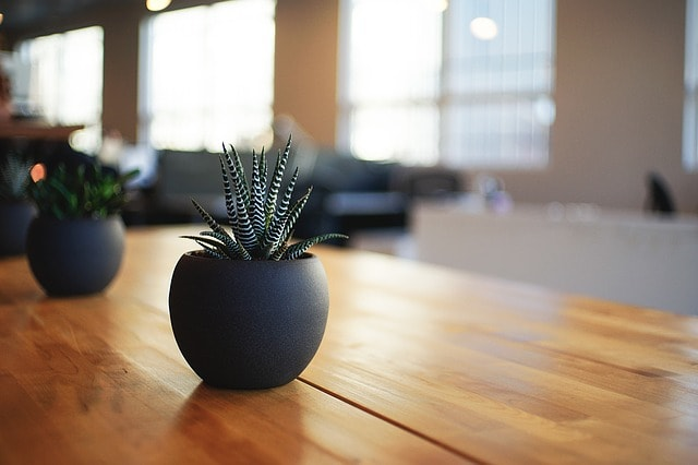 Workplace Productivity Plants